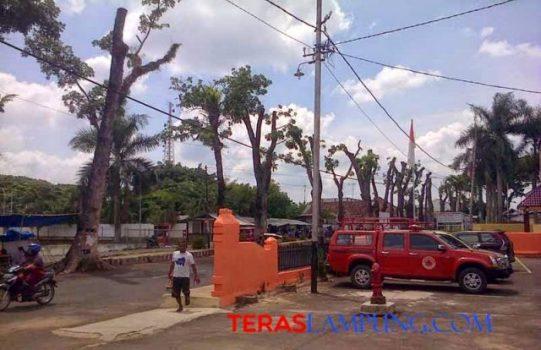 "Pohon-pohon mahoni di Jalan Perwakilan Kotabumi tampak ""ramping"" setelah dipangkas Dinas Tata Kota. (Foto Teraslampung.com/Feaby)"