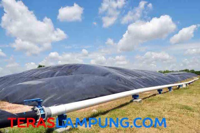 Covered In-Ground Anaerobi Reaktor (CIGAR) atau septic tank raksana yang menjadi pembangkit energi berbahan biogas milik PT Santori, d Bumiaji, Anaktuha, Lampung Tengah. (Foto: Oyos Saroso HN