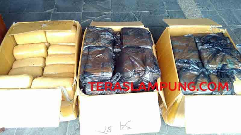 Ganja 99 kg milik Hadi siap diedarkan ke seluruh kabupaten/kota di Lampung.