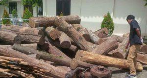 Barang bukti pembalakan liar yang terjadi di kawasan hutan register Tanjung Raja, Lampung Utara