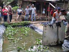 Bupati Mesuji, Khamami, mengunjungi kolam ikan di Desa Tri Karya Mulya.