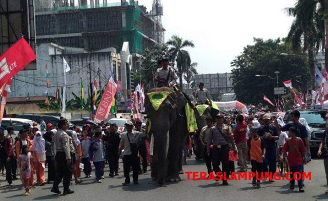 Dua gajah Way Kambas memeriahkan penyambutan obor Asian Games di Kota Bandarlampung, Rabu (8/8/2018). Teraslampung/Dandy Ibrahim