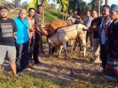 Petugas Unit Reskrim Polsek Palas dan Tekab 308 Polres Lampung Selatan, menemukan empat ekor sapi milik warga Dusun Banjarsari, Desa Bumirestu, Kecamatan Palas, Lampung Selatan yang hilang dicuri di Kecamatan Jabung, Lampung Timur, Senin 3 September 2018. (Foto: Polsek Palas)