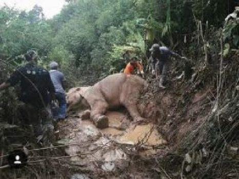 BKSDA Aceh dan VESSWIC mengobati gajah yang terkena jerat. Kredit: BKSDA/Kementerian LHK