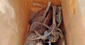 Tulang belulang manusia yang ditemukan di Desa Bumiagung Marga, Abung Timur