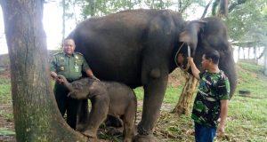 Kepala Balai Taman Nasional Way Kambas, Subakir (kiri), bersama bayi gajah yang baru dilahirkan oleh induk gajah penghuni PLG Way Kambas bernama Bunga (Foto: Istimewa)