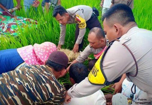Mayat Mbah Taniran Ditemukan di Pematang Sawah Pekon Podomoro Pringsewu