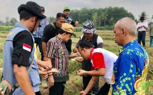 Kepala Dinas TPH Lampung, Achmad Chrisna Putra (tengah, memakai topi) meninjau tanaman yang diserang hama ulat grayak di Desa Banjar Sari, Metro Utara, Jumat (28/6/2019).
