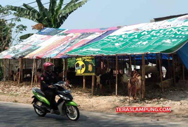 Lapak pedagang kambing kurban di jalan Rasuna Said, Bandarlampung.