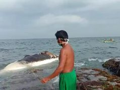 Bangkai ikan paus yang terdampar di pinggiran pantai Pulau Sebesi, Lampung Selatan, Senin (6/1/2020).