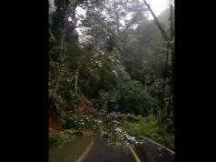 Tanah longsor dan pohon tumbang di ruas jalan Liwa - Krui pada Jumat petang (24/1/2020) menyebabkan lalu lintas dari Lampung Barat menuju Kabupaten Pesisir Barat lumpuh. Hingga Jumat malam pukul 21.00 WIB material jalan belum dibersihkan.