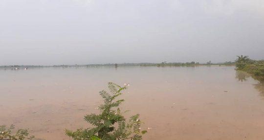 Tanggul Way Katibung Jebol, Ratusan Hektare Sawah di Tiga Desa Kecamatan Candipuro Terendam