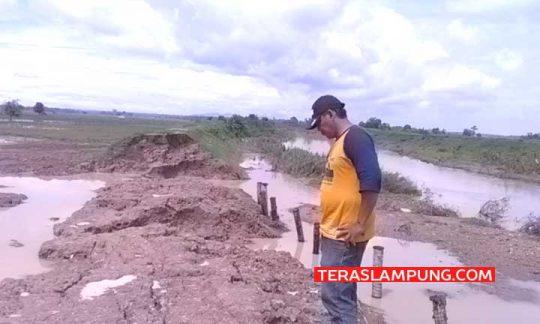 Tanggul sungai Way Katibung jebol di Desa Sinar Pasmah, Kecamatan Candipuro, Lampung Selatan yang merendam 300 hetar lahan sawah tiga desa di Kecamatan Candipuro belum dilakukan perbaikan, Sabtu (11/1/2020).