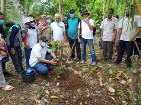 Penanaman pohon bibit di Pekon Teratas, Kotaagung, Kabupaten Tanggamus, Sabtu pagi (28/11/2020). Foto: Budhi Marta Utama