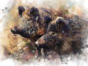 Celeng babi @azazelok - Pixabay
