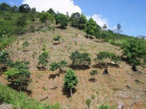 Kondisi Bukit Rigis di Lampung Barat yang rusak sebelum ada program HKm (Foto: dok Watala)