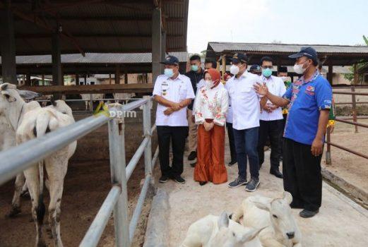 Mendes PDTT Abdul Halim Iskandar meninjau KPT Sejahtera di Desa Tanjungsari, Natar, Lampung Selatan, Rabu (8/9/2021).