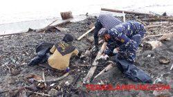 Warga membersihkan limbah yang mencemari kawasan Pantai Kotaagung. Foto: Teraslampung.com/Siswanto